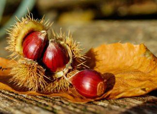 Castagne… lo sapevi che?   Maria Teresa Nivuori   Biologa Nutrizionista a Torino