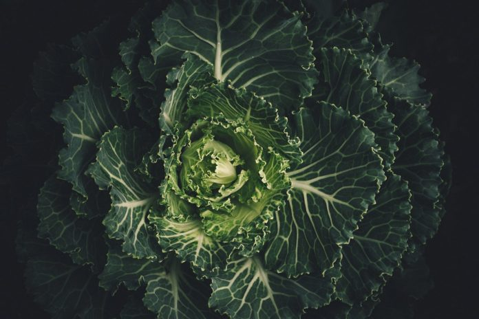 Chips di cavolo nero. | Maria Teresa Nivuori | Biologa Nutrizionista a Torino